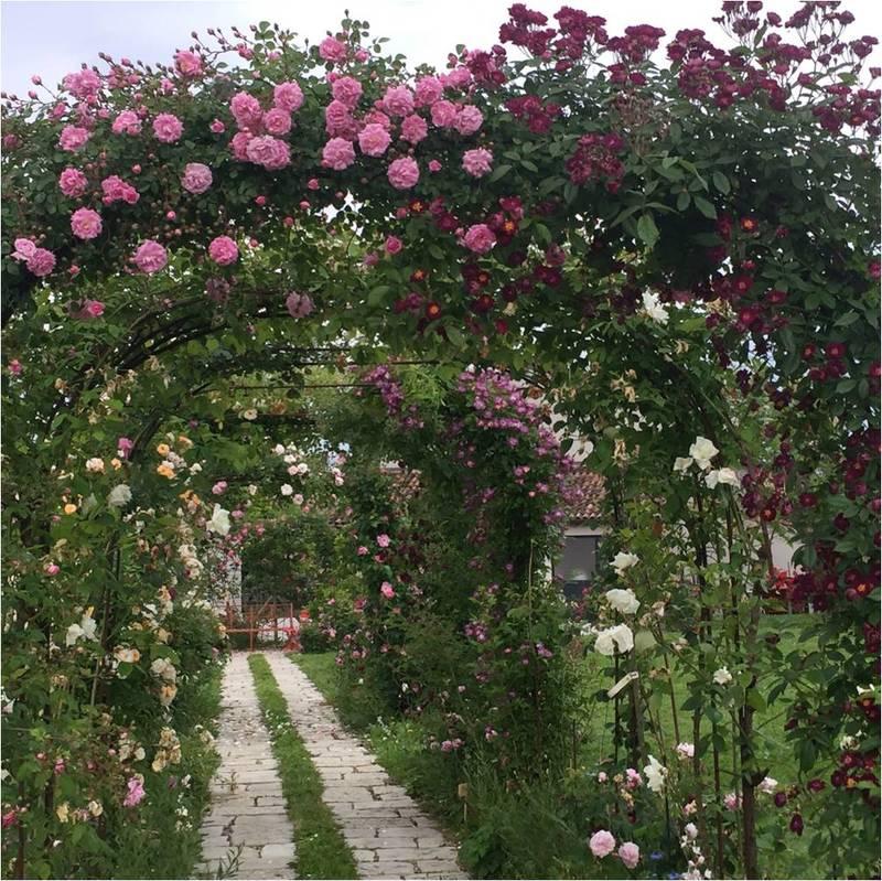Visita il giardino delle rose di grazia ca 39 foscari alumni - Il giardino delle rose ...
