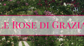 Small_le_rose_di_grazia